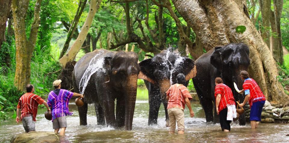 Proprietar de elefant pentru o zi in Thailanda